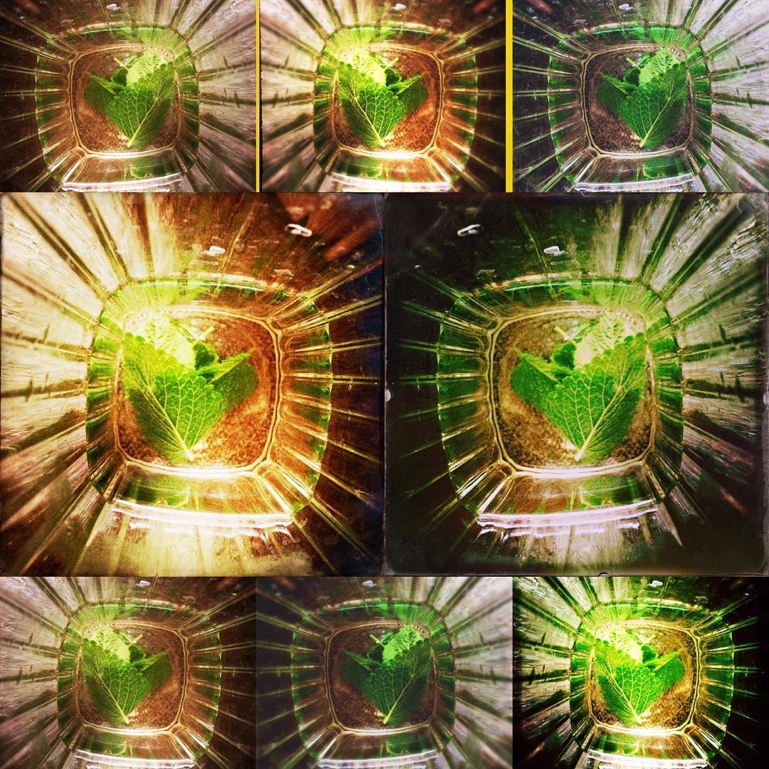 Collage aus Bildern, die Zitronenmelissenblätter in einem tiefen Teeglas zeigen.