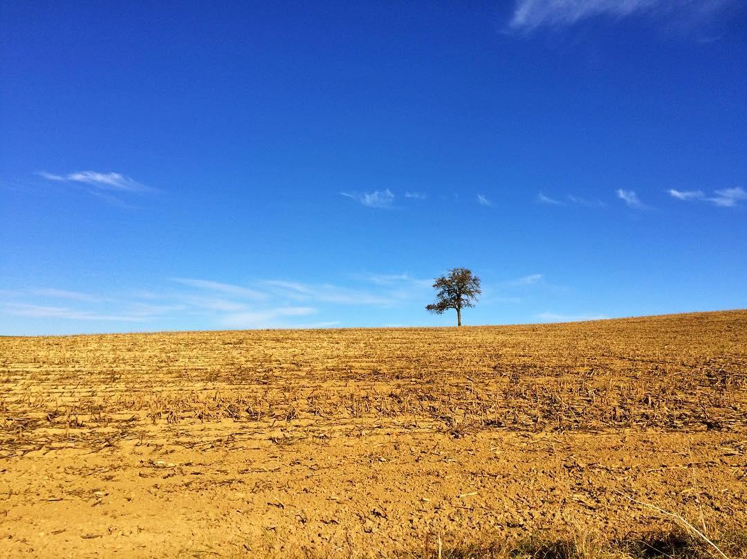 Acker, am Horizont ein einzelner Baum, blauer Himme