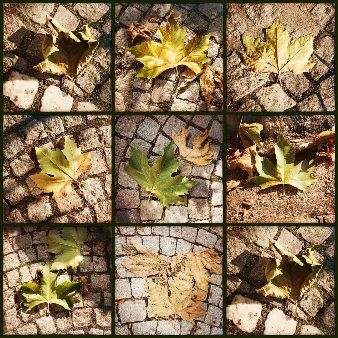 Callage aus neun verschiedenen quadratischen Bildern mit Platanenblättern in Herbstfärbung auf Boden